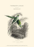 The Naturalist's Library I Prints by W.h. Lizars