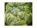 Cabbage, 2013 Giclee Print by Jennifer Abbott
