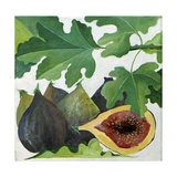 Figs, 2013 Giclee Print by Jennifer Abbott