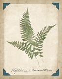 Vintage Ferns X Posters