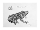 3E Mallorcan Midwife Toad, 2009 Giclee Print by Xavier Cortada