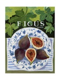 Fieus (Figs), 2014 Giclee Print by Jennifer Abbott