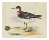 Meyer Shorebirds II Giclee Print by H. l. Meyer