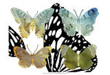 Layered Butterflies IV Print by Sisa Jasper