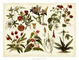 Tropical Botany Chart II Reproduction procédé giclée par  Meyers