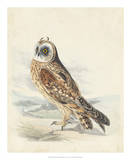 Meyer Hawk Owl Giclee Print by H. l. Meyer