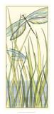 Gossamer Dragonflies I Giclee Print by Chariklia Zarris