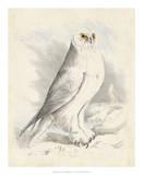 Meyer Snowy Owl Giclee Print by H. l. Meyer