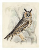 Meyer Long-Eared Owl Giclee Print by H. l. Meyer