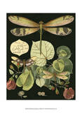 Whimsical Dragonfly on Black II Poster by  Vision Studio