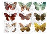 Layered Butterflies II Poster by Sisa Jasper
