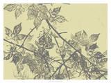 Grey Leaves I Giclee Print by Jennifer Goldberger