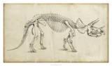 Dinosaur Study II Stampa giclée di Ethan Harper