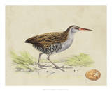 Meyer Shorebirds III Giclee Print by H. l. Meyer