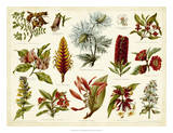 Tropical Botany Chart I Giclee Print by  Meyers