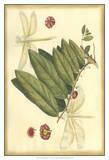 Floral Fantasia V Prints