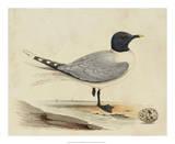 Meyer Shorebirds I Giclee Print by H. l. Meyer