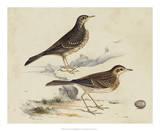 Meyer Shorebirds VI Giclee Print by H. l. Meyer