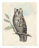 Meyer Scops-Eared Owl Giclee Print by H. l. Meyer