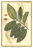 Floral Fantasia IV Print