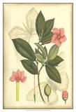 Floral Fantasia II Poster
