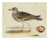 Meyer Shorebirds IV Giclee Print by H. l. Meyer