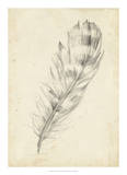 Feather Sketch II Giclee Print by Ethan Harper