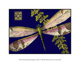 Mini Shimmering Dragonfly II Giclee Print