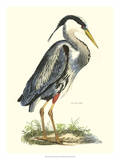 Great Blue Heron Premium Giclee Print by John Selby