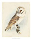 Meyer Barn Owl Giclee Print by H. l. Meyer