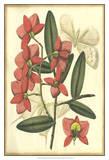 Floral Fantasia III Prints