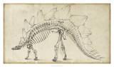 Dinosaur Study III Giclee Print by Ethan Harper