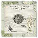 Biologia Marina II Giclee Print