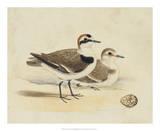Meyer Shorebirds V Giclee Print by H. l. Meyer