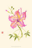 Hibiscus Flower IV Prints by Nan Rae