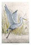 Heron Sanctuary I Giclee Print by Tim