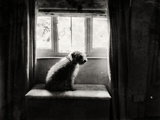 Fozzie Waiting Photographic Print by Tim Kahane