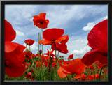 A Field of Red Poppies in Bloom under a Cloud-Filled Sky Framed Photographic Print by Amy & Al White & Petteway