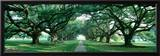 Louisiana, New Orleans, Brick Path Through Alley of Oak Trees Framed Photographic Print by  Panoramic Images