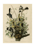 Mocking Bird Giclee Print
