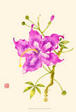 Hibiscus Flower I Prints by Nan Rae
