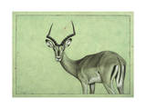 Impala Giclee Print by James W. Johnson