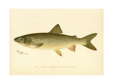 Lake Trout Giclee Print