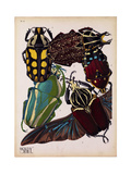 Insects, Plate 3 Giclee Print