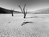 Namibia Dead Vlei Photographic Print by Nina Papiorek