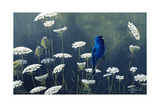 Indigo and Lace - Indigo Bunting Giclee Print by Wilhelm Goebel