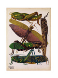 Insects, Plate 16 Giclee Print