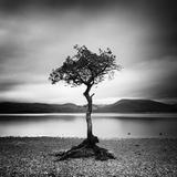 Millarrochy Tree Fotografisk trykk av Nina Papiorek