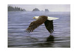 Low Flight Bald Eagle Giclee Print by Jeremy Paul