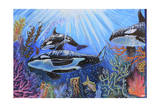 Killer Whales Giclee Print by Martin Nasim